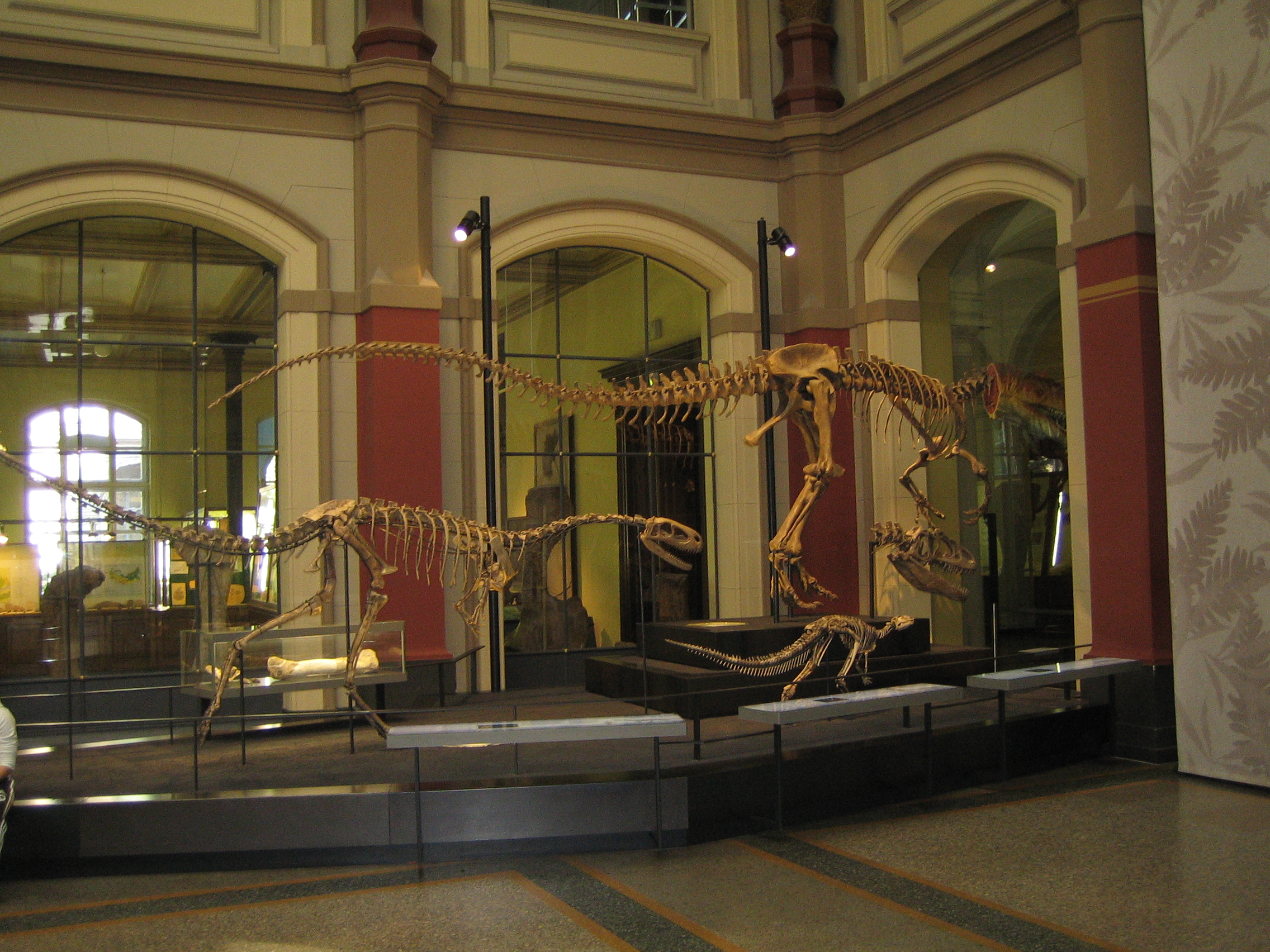 Diverse dinosaurskeletter fra Museum für Naturkunde